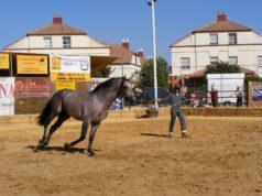 """Los mejores caballos de Pura Raza Española estarán en la quinta edición de """"Una Pará en Gines"""""""