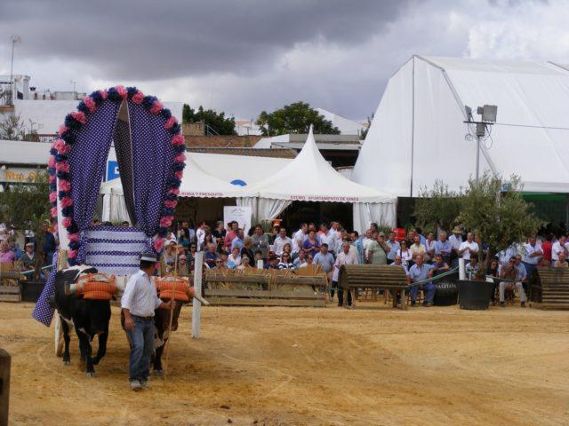 Concurso-Yuntas-Gines 2010