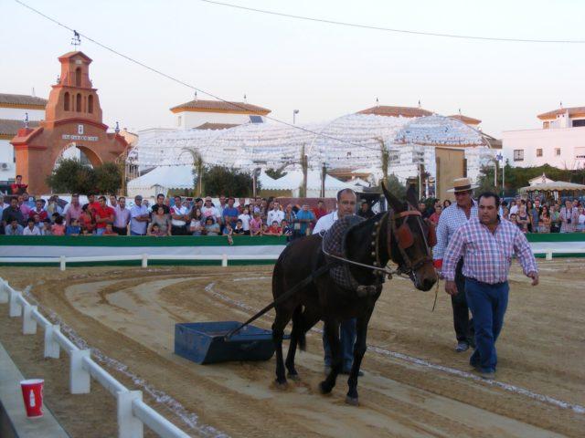 """El espectacular Concurso de Yuntas y Carreteros cierra este domingo la 6ª edición de """"Una Pará en Gines"""""""