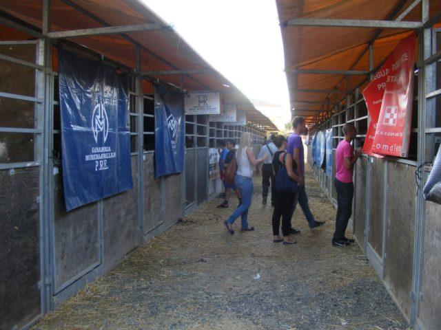 Boxes y corraletas para la compra, venta y trato de ganado en Una Pará en Gines