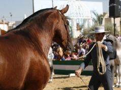 """El Concurso Morfofuncional de Caballos de Pura Raza Española """"Ciudad de Gines"""" tendrá este año de categoría Internacional"""
