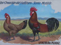 Gallina-utrerana