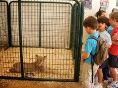 """Un buen número de animales exóticos visitarán """"Una Pará en Gines"""" de la mano de MundoPark"""