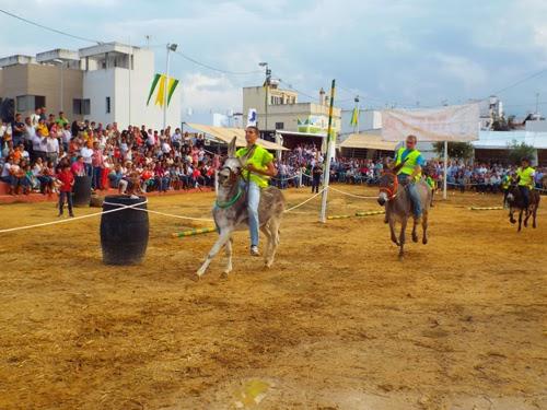 Pará 2014-Carrera-Burros