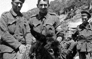 La Pará de Gines conmemorará el centenario del heroísmo del soldado Simpson y sus burros-ambulancia