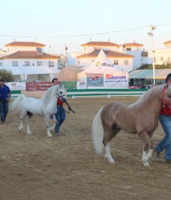 Campeonato De Andalucía De Ponys