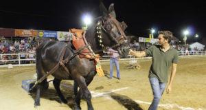 Arrastre de piedras con mulos - La Pará 2019 - Gines