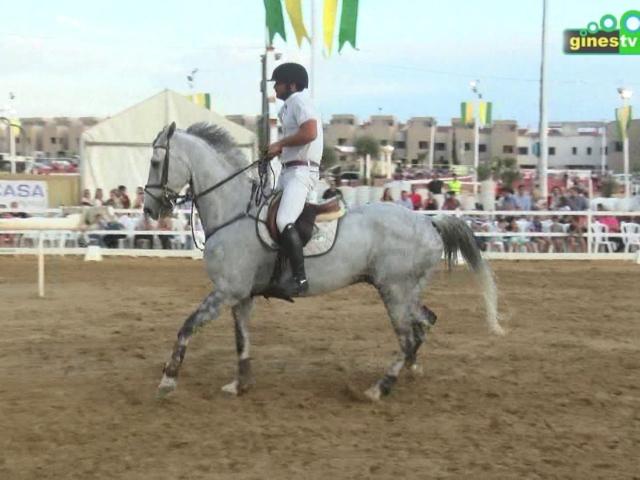 El caballo en todo su esplendor en el II Concurso Social de Salto de Potencia de Obstáculos de Gines