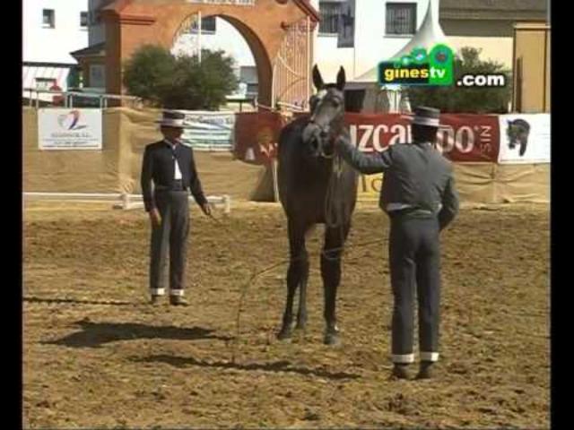 Gines acogerá a los mejores caballos...