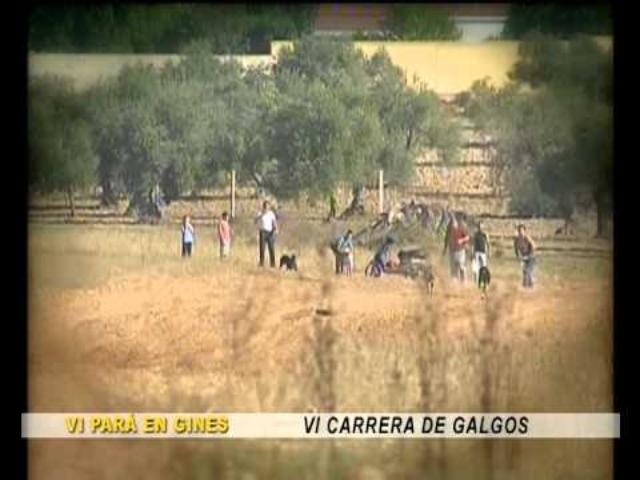 """VI Carrera de Galgos en """"Una Pará en Gines 2012"""""""