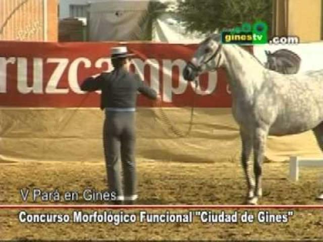 Concurso Morfológico Funcional de ...