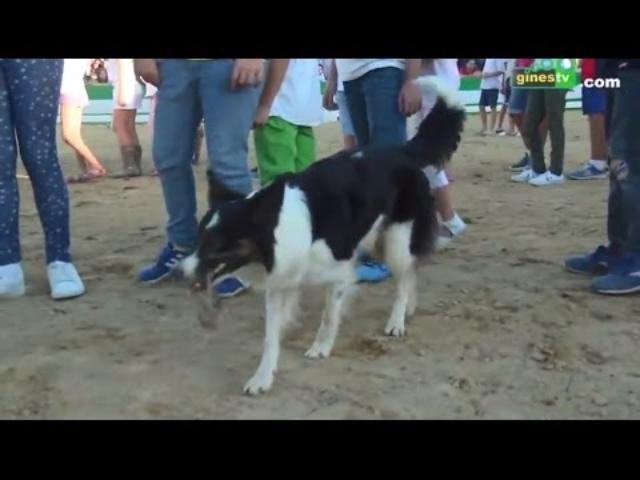 Exhibición canina de Agility