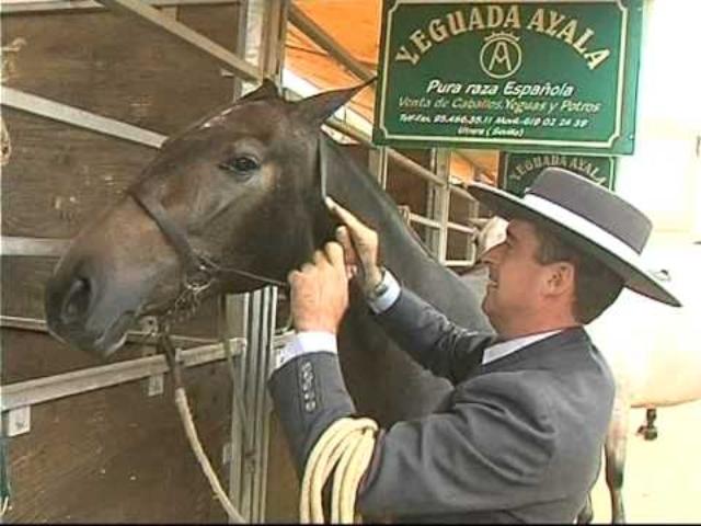 Los mejores caballos de Pura Raza E...
