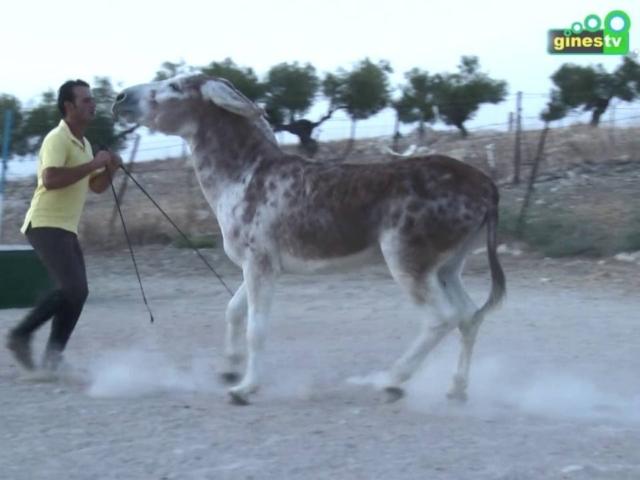 Caramelo regresa a Una Pará en Gines