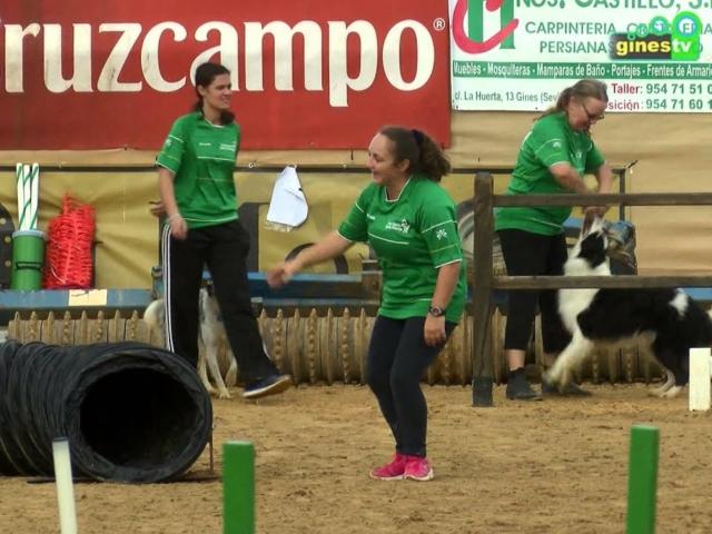 Exhibición canina de agility en Una P...