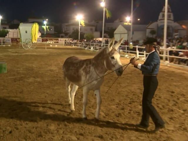 Espectáculo del pony Risitas
