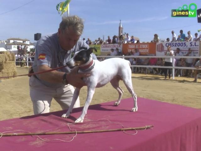 El Perro Ratonero Bodeguero And...