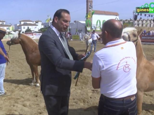 I Campeonato de Andalucía de Welsh Mountain Pony